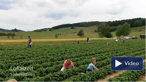 Erdbeeren-Korte-Niederhelden