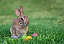 Osterhase - Bunte Eier