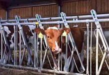 Die Kaisers – Milchbauern im Sauerland