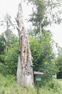Der Pissebaum