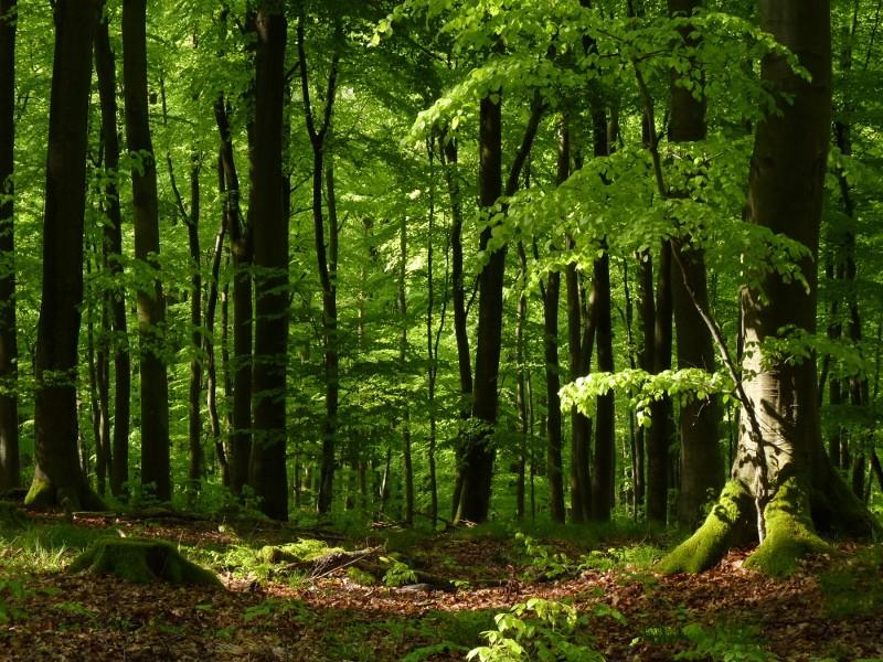 Foto: Wald und Holz NRW