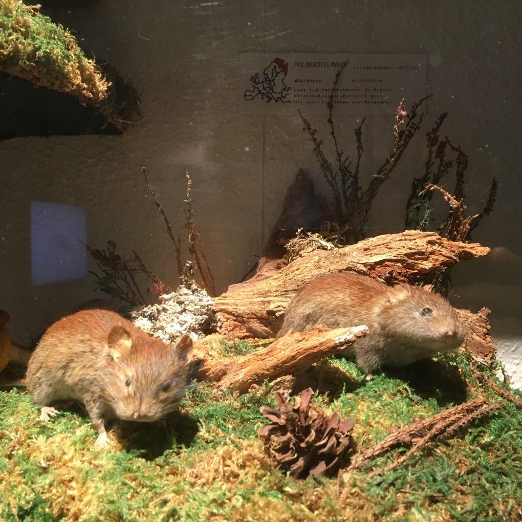 Born to Wald - Südsauerlandmuseum Attendorn
