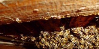 Flugloch Bienen - Imkerverein Attendorn