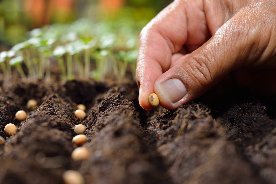 attendorner geschichten - samen pflanzen